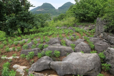 Chemical composition of bedrock limits vegetation growth in karst regions, research shows